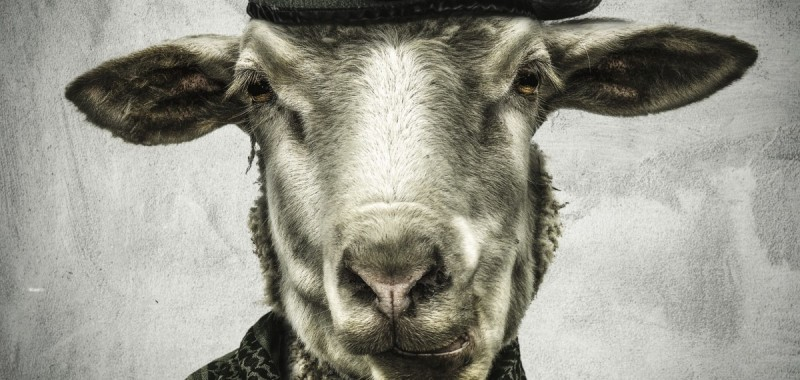 Emre-Yusufi-War-Sheep-Portrait-Mix-Media-50x50-Aluminum-and-Glass-2016-1200x570