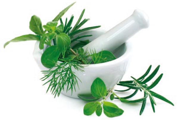 photo-plantes-medicinales