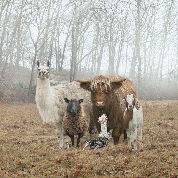 gang-animaux-mini