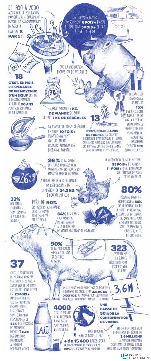Infographie-consommation-et-production-viande-bovine