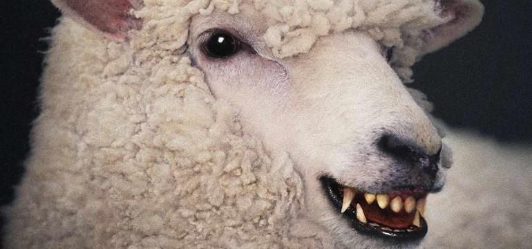 sheep_tokuchan-770x360