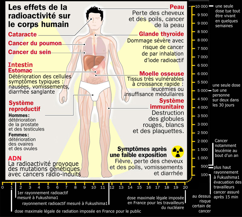 effets_radioactivite_sur_corps-humain_800_1_