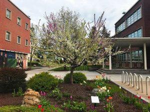 Cet arbre «magique» produit 40 variétés différentes de fruits Arbre-40-fruits-300x225
